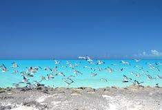 Pouco Exuma, Bahamas imagem de stock
