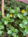 Pouco flores amarelas brilhantes bonitos fotos de stock