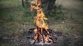 Pouco fogueira do acampamento na terra vídeos de arquivo