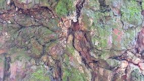 Pouco formigas pretas que correm em torno do tronco de árvore filme