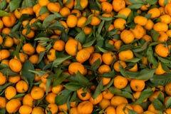 Pouco fruto alaranjado Fotografia de Stock