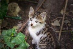 Pouco gatinho bonito para sentar-se na terra imagem de stock
