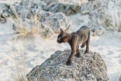 Pouco gatinho de Blkack Foto de Stock Royalty Free