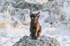 Pouco gatinho de Blkack Fotos de Stock Royalty Free