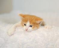 Pouco gatinho do branco-e-gengibre que olha das cadeiras brancas macias de trás escaladas Fundo claro Foto de Stock