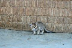 Pouco gatinho feio, bebê do gato de gato malhado fotografia de stock