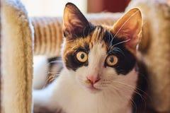 Pouco gato peludo fotografia de stock royalty free