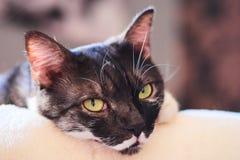 Pouco gato peludo imagem de stock