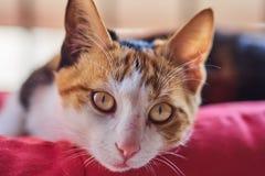 Pouco gato peludo foto de stock