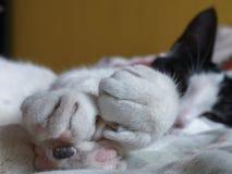 Pouco gato preto e branco pronto para a sesta fotografia de stock