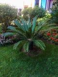Pouco jardim do paraíso da palmeira fotos de stock royalty free