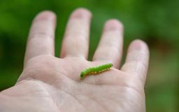 Pouco lagarta na profundidade rasa do witrh da mão de um homem fotografia de stock