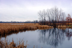 Pouco lago april Fotografia de Stock Royalty Free