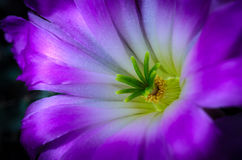Pouco macro da flor Foto de Stock