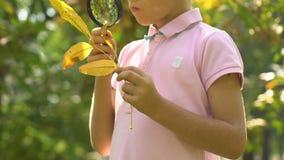 Pouco menino curioso que olha na folha através da lupa, aprendendo a natureza video estoque