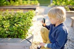 Pouco natureza de exploração da criança com a lupa na horta da comunidade Fim acima Rapaz pequeno que olha com ampliação imagens de stock