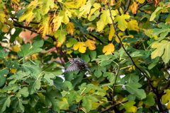 Pouco pássaro, na frente de uma árvore de figo imagem de stock royalty free