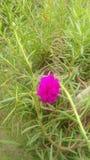 Pouco papel de parede natural da flor bonita Imagens de Stock Royalty Free