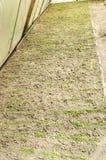 Pouco plântulas da beringela que crescem em uma estufa Vegetais org?nicos crescentes cultivar agricultura Beringela das sementes  imagens de stock