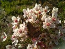Pouco rã da princesa do rio obteve flores imagens de stock