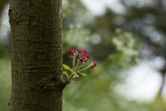 Pouco ramalhete da natureza Foto de Stock Royalty Free