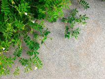 Pouco ramo da planta verde e da flor na terra concreta suja na cidade grande para o fundo natural Foto de Stock Royalty Free