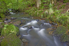 Pouco ribeiro na floresta Imagem de Stock Royalty Free