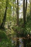 Pouco rio de Duete em Baixa Saxónia, Alemanha imagens de stock