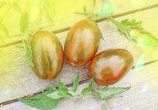 Pouco tomate verde do tigre imagem de stock royalty free