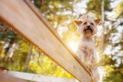 Pouco yorkshire terrier que levanta na árvore no verão fotografia de stock royalty free