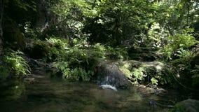 Poucos cachoeira e córrego na natureza vídeos de arquivo