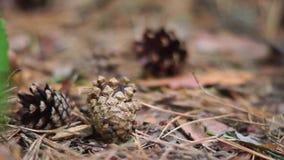Poucos enfeitam cones na terra video estoque