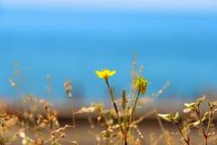 Poucos flor e mar amarelos no dia ensolarado do verão imagens de stock