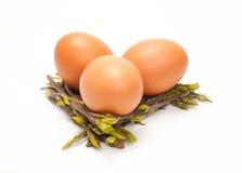 Poucos ovos da galinha Fotografia de Stock Royalty Free