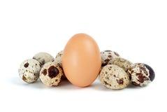 Poucos ovos de codorniz e único ovo de galinha Imagens de Stock Royalty Free