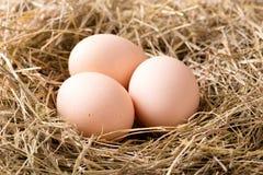 Poucos ovos de galinha colocados no monte de feno Imagens de Stock