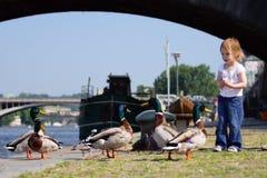 Poucos patos selvagens do feedind da menina da beleza Fotos de Stock Royalty Free