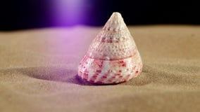 Poucos shell do mar com areia e luz traseira video estoque