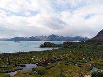 Południowy Gruzja Antarctica Obrazy Royalty Free
