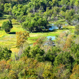 Południowy Illinois bagna krajobraz Zdjęcie Stock