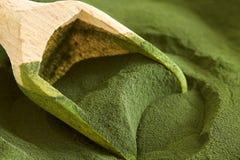 Poudre d'algues de chlorella image libre de droits