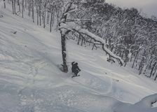 Poudre profonde de ski de skieur dans la forêt neigeuse Photo libre de droits