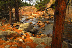 Poudre River. Looking through the trees and the Poudre River royalty free stock image