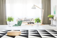 Spacious living room with pouf. Pouf and table on geometric carpet in spacious living room with ferns and green curtains Stock Images