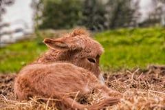 Poulain d'âne Photographie stock