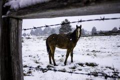 Poulain de cheval dans la neige photographie stock libre de droits