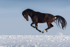 Poulain en hiver images libres de droits