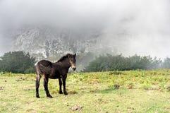 Poulain sauvage dans la montagne Photographie stock