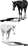 Poulains noirs et blancs avec des ombres Photographie stock libre de droits
