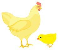 Poule avec le poulet Photos stock